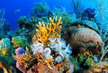 شاهد ما هو الحيد المرجاني العظيم باستراليا
