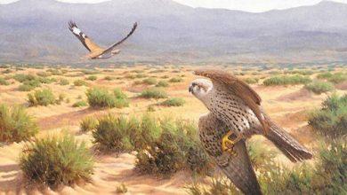 شاهد أحدي المحميات الطبيعة في المملكة